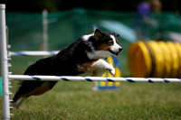 AQ1I3061_Agility Advanced Competition 11AM